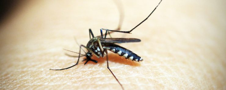 Keeping Mosquitoes Out Of Your Yard